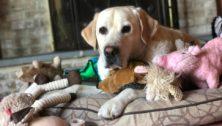 Dogs & Cats Rule best pet supplier in Bucks County