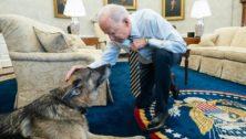 President Joe Biden and Champ, bred in Chester County.