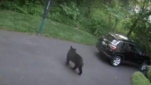 Yardley bear