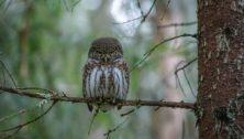 owl birding experts