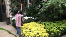 A woman taking pictures at Longwood Gardens
