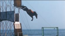 Atlantic City Steel Pier diving horse