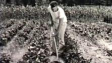 World War II Victory Garden